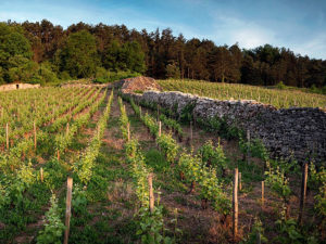 White Burgfest: The 2014 vintage