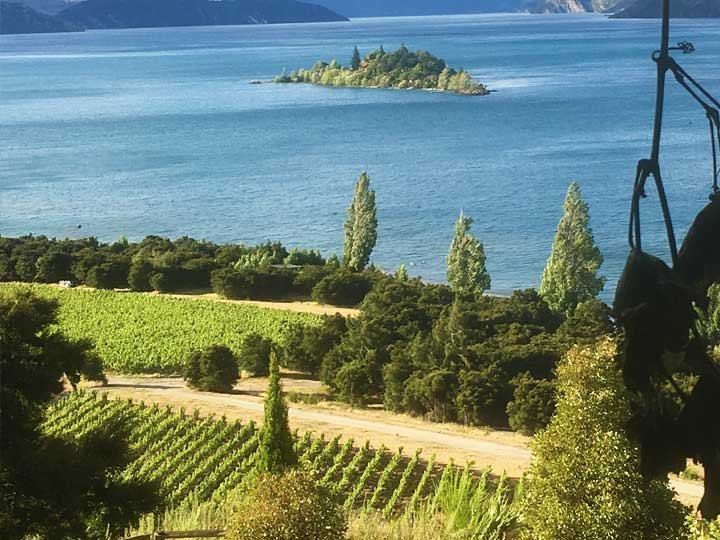 Fine wines of New Zealand
