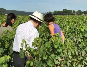 Healthy looking vines ahead of summer heat