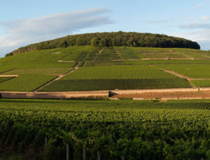 A Tour Around the Hill of Corton