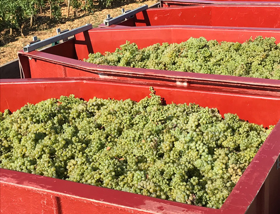 Harvest 2019: Picking begins