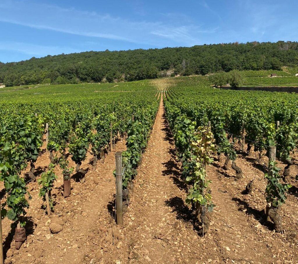 Clos St Jacques 2017 vineyard