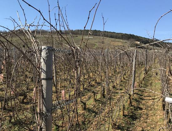 Côte de Nuits: 2017 Wines Re-Tasted