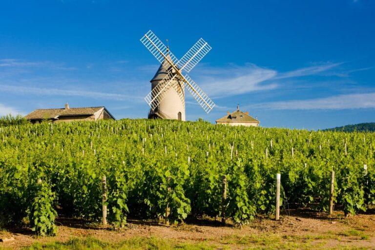 Jasper on Zoom: Beaujolais: Moulin-à-Vent