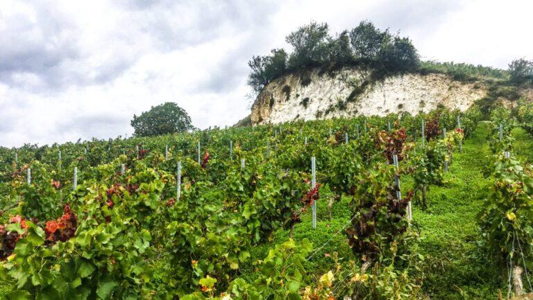 Jasper on Zoom: Grand Cru Burgundy: Romanée-St-Vivant