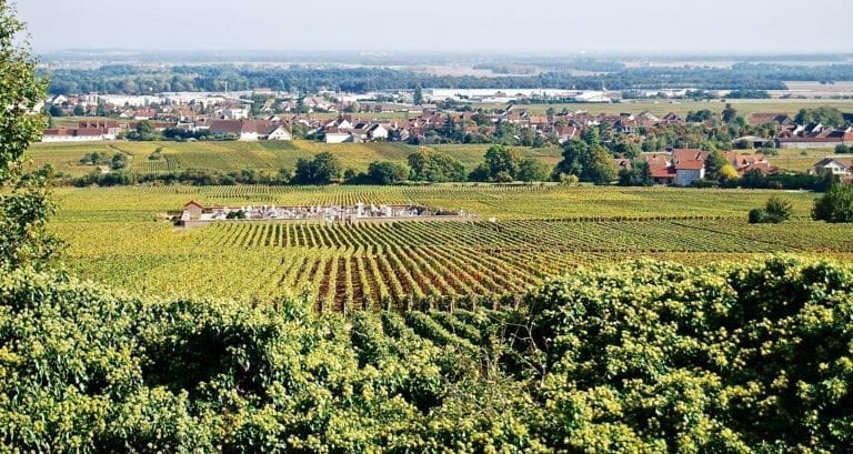 Jasper on Zoom: Chambolle-Musigny Combe d'Orveau