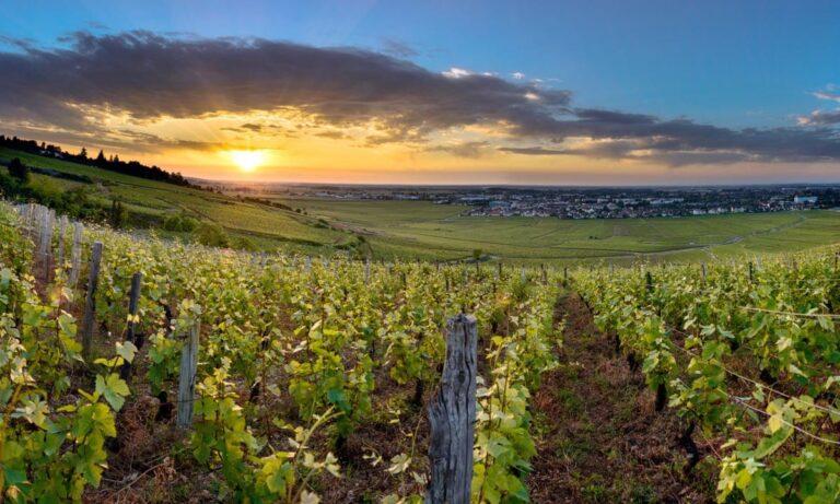 Jasper on Zoom: 1855 Revisited: Tete de Cuvée Vineyards