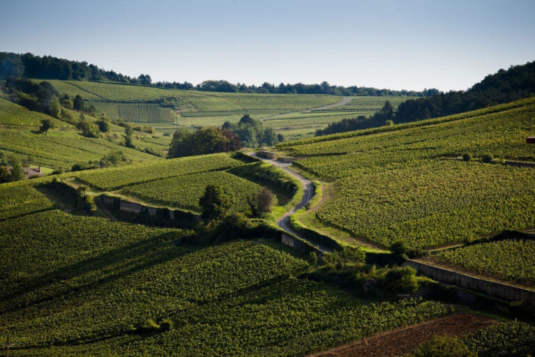 Jasper on Zoom: Heading to the Back Country of the Côte de Beaune