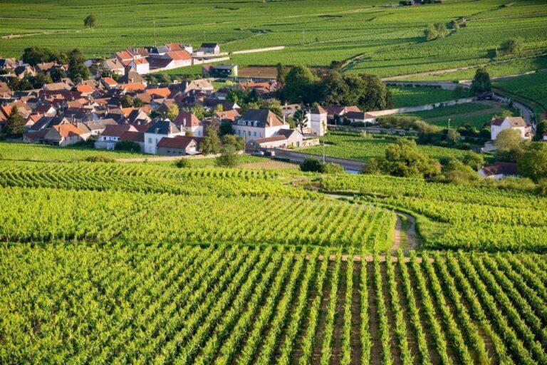 Jasper on Zoom: Ancient Vines