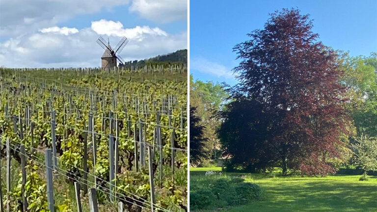 May/June 2021: Latest News from Burgundy