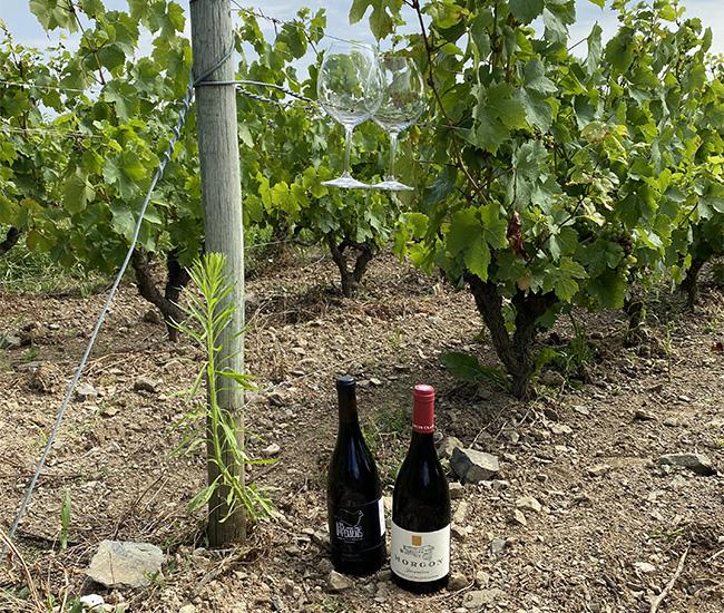 vineyard tasting in Beaujolais 650x550