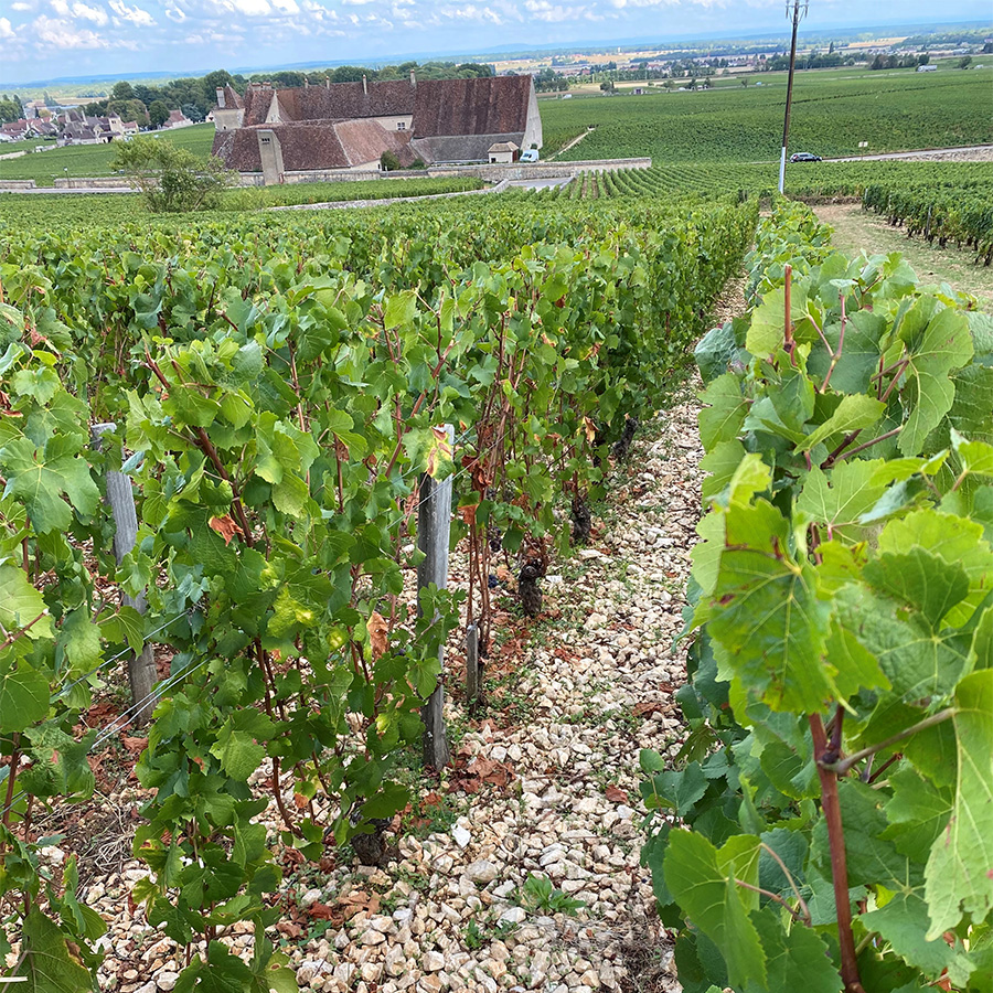 2019 Continued: Further tastings in Chambolle-Musigny and Vougeot