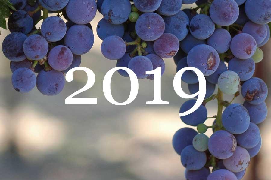 2019 Vintage Overview